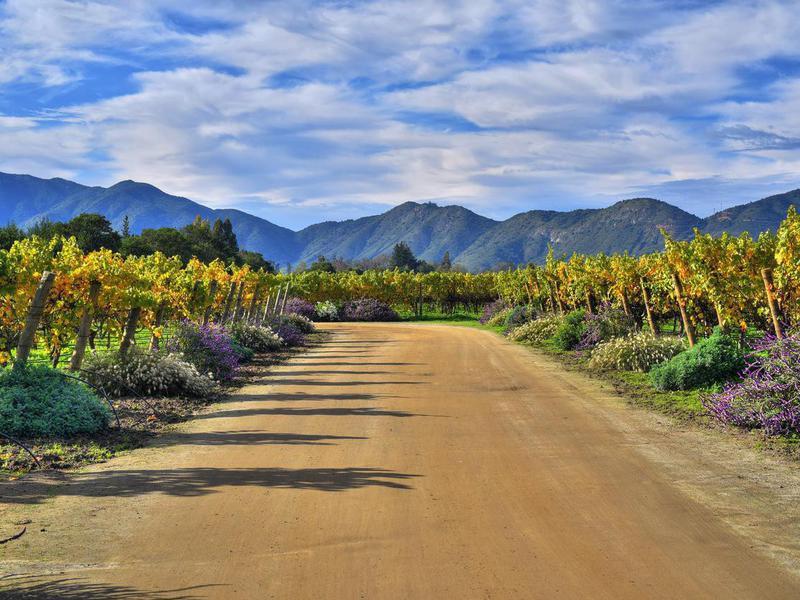 Organic vineyard in Chile