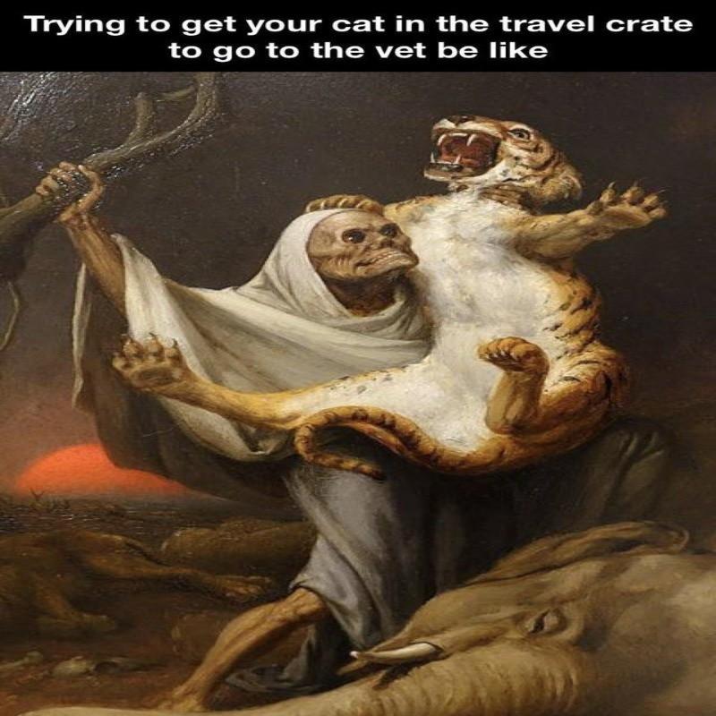 Taking your cat to the vet meme