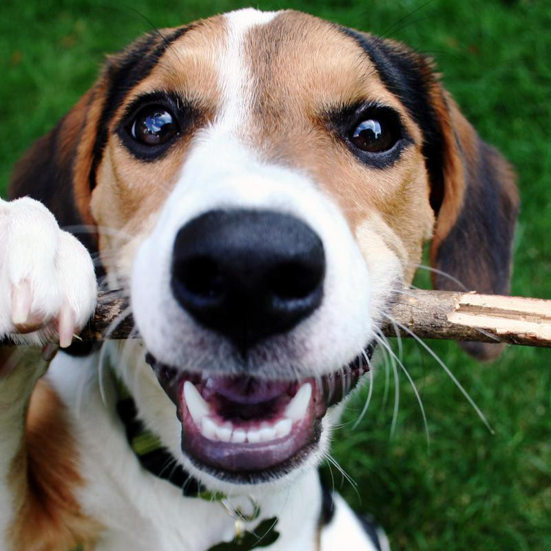 Some dogs prefer to play fetch with sticks.