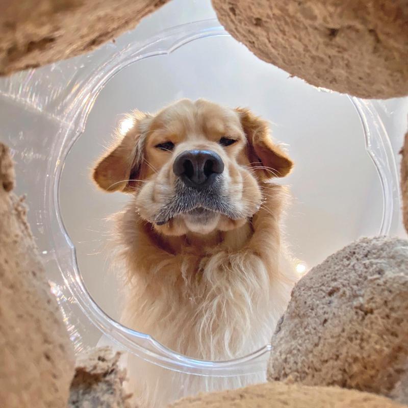 dog reflection