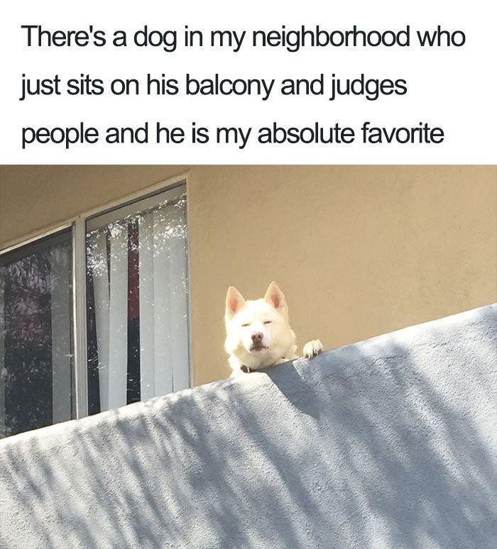 Dog who judges people