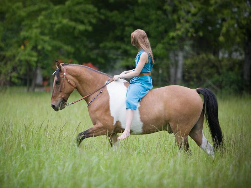 Young woman on Tennessee Walking Horse