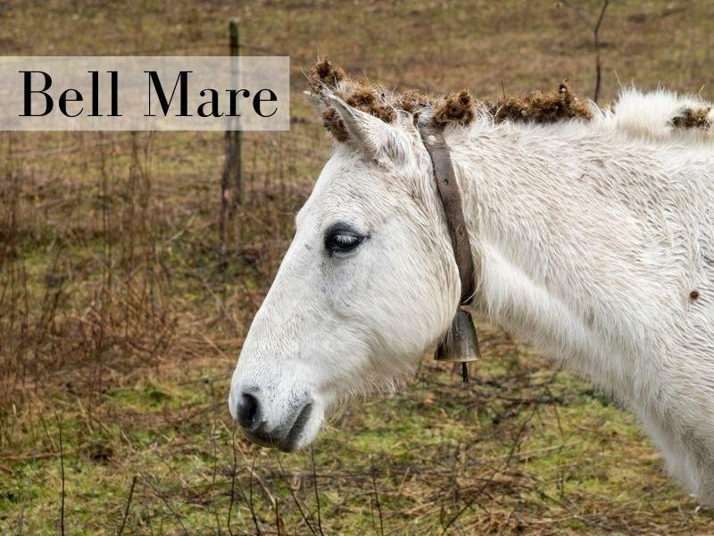 Bell Mare