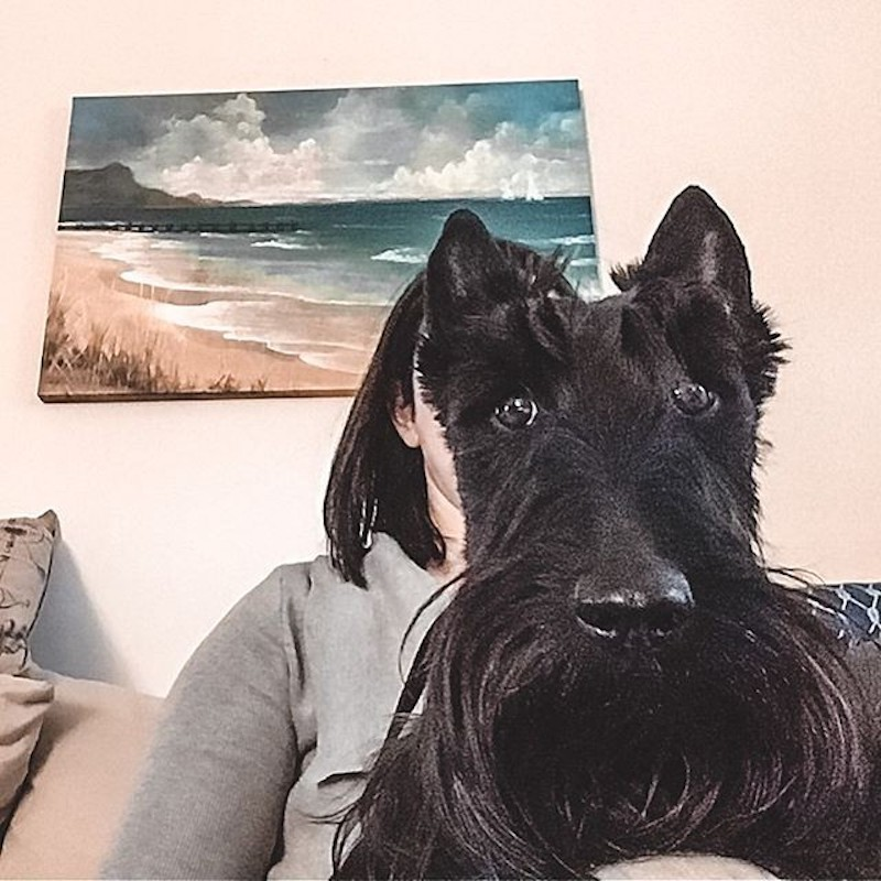Dog on Zoom