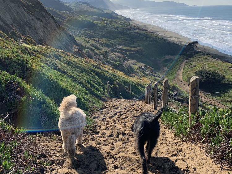 Two dogs walking to a dog beach