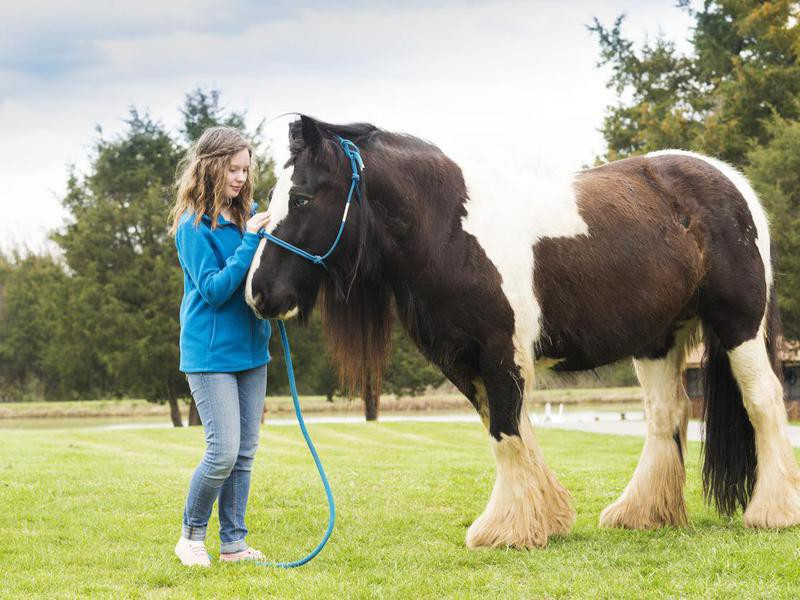 Girl and Gypsy Vanner horse
