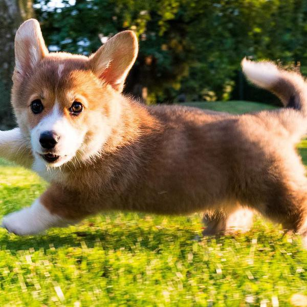 Cheapest and Cutest Dog Breeds in the World