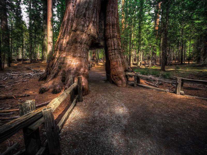 Sequoia - Present