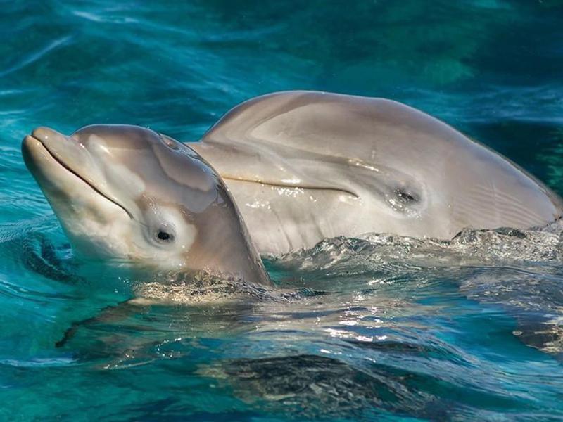 Newborn baby dolphin