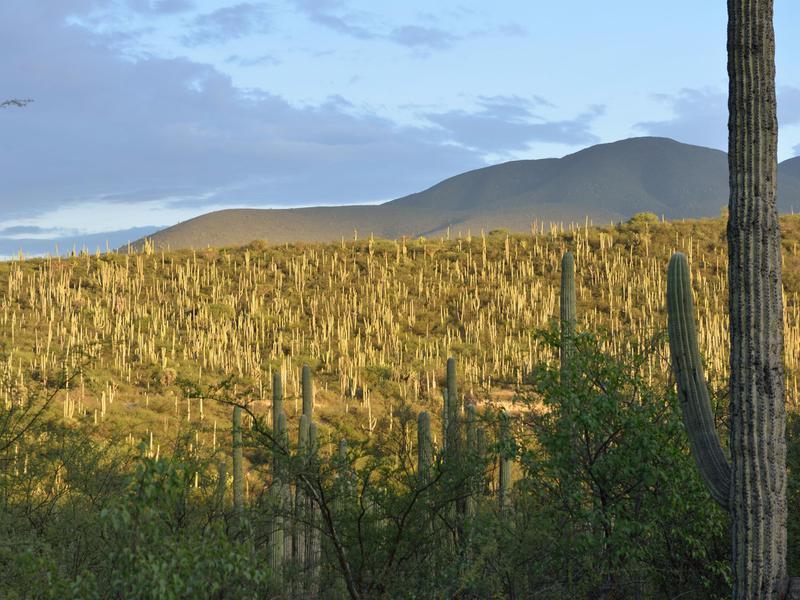Tehuacan Landscape