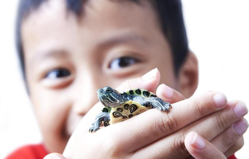 Boy holding small turtle