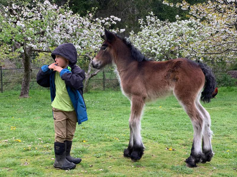 Little boy and Dales Pony filly