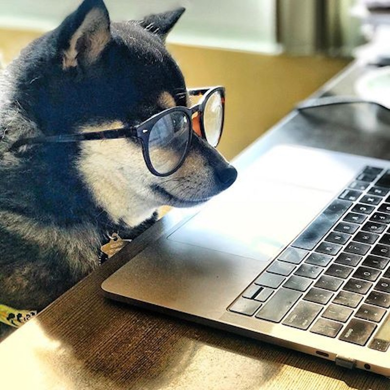 Dog working at a laptop