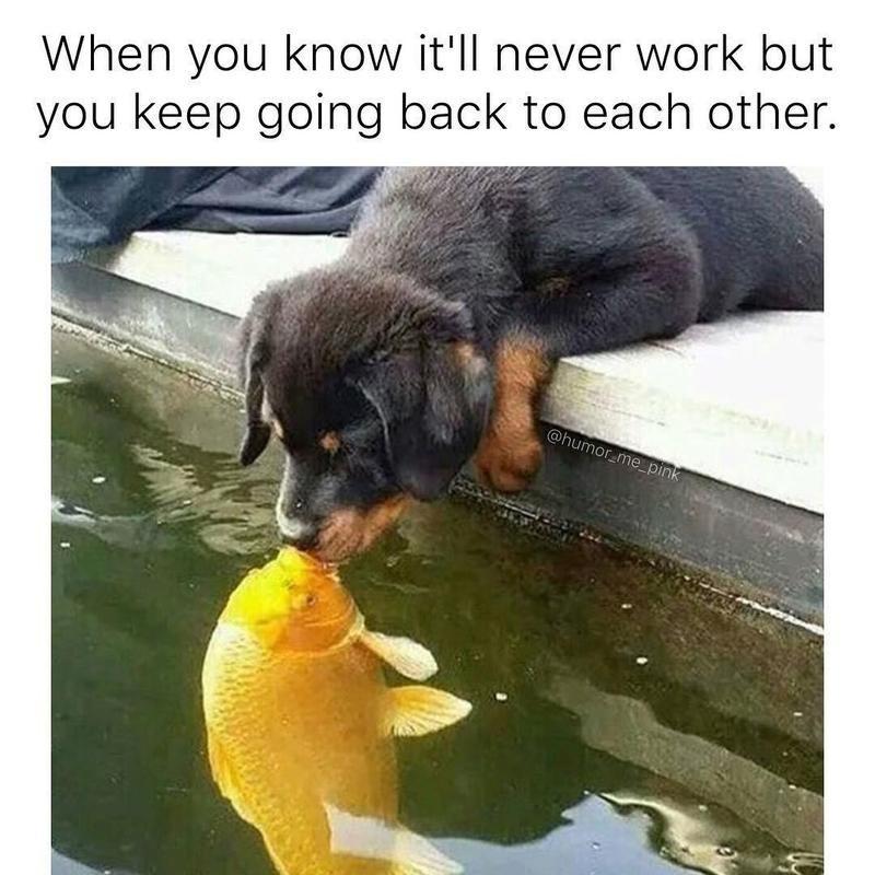 dog kissing fish