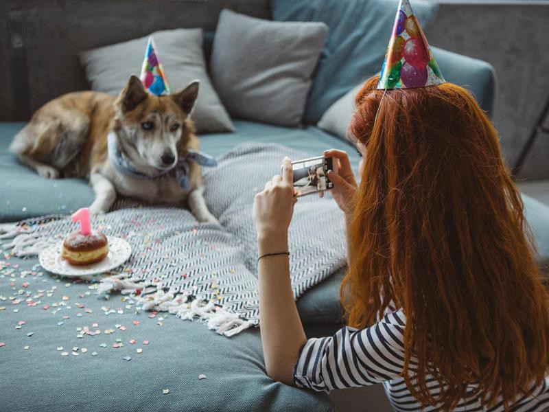 Your Dog Has Their Own Social Media Account(s)