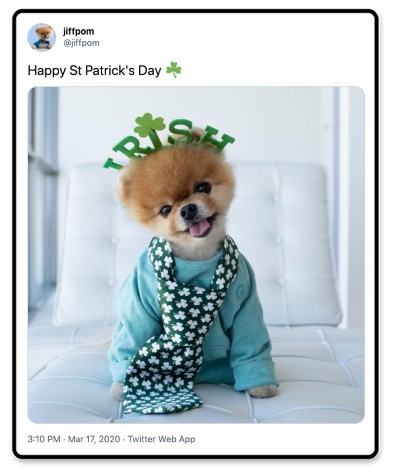 Jiffpom is ready for St. Patrick's Day