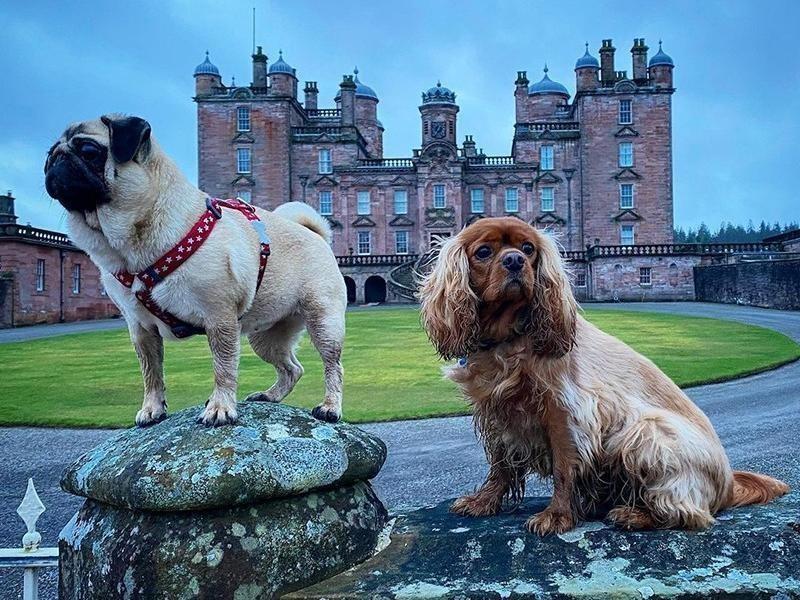 Dogs at Drumlanrig Castle