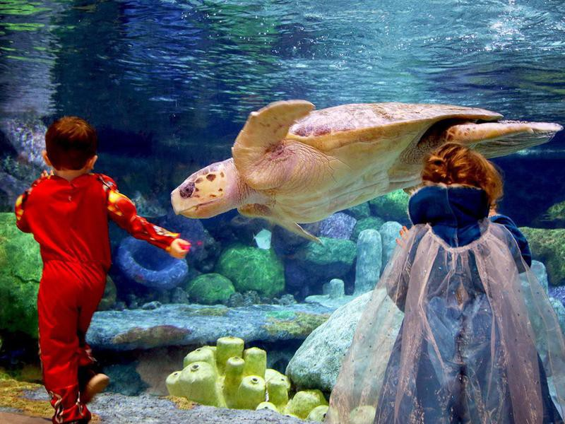 Oklahoma Aquarium sea turtle