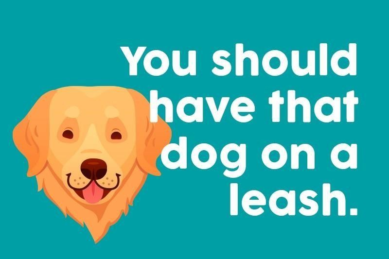 You should have that dog on a leash.