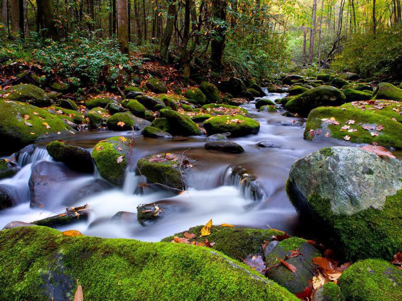 River in Great Smoky Mountains