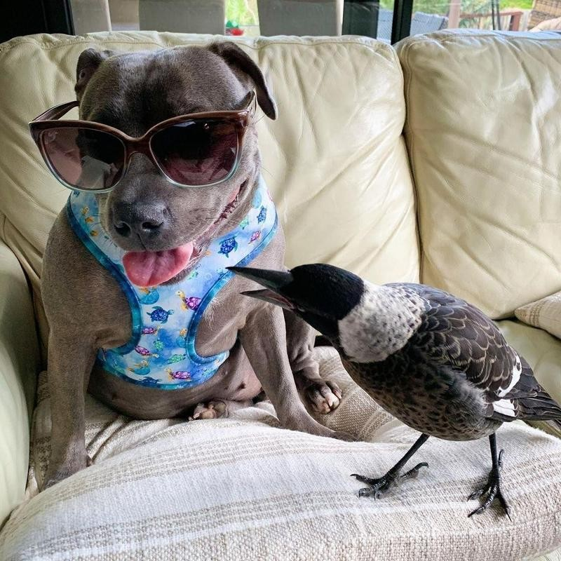Dog and crow chilling