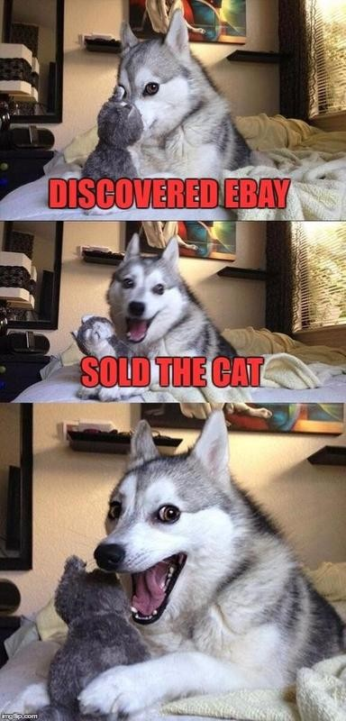 Dog sold the cat