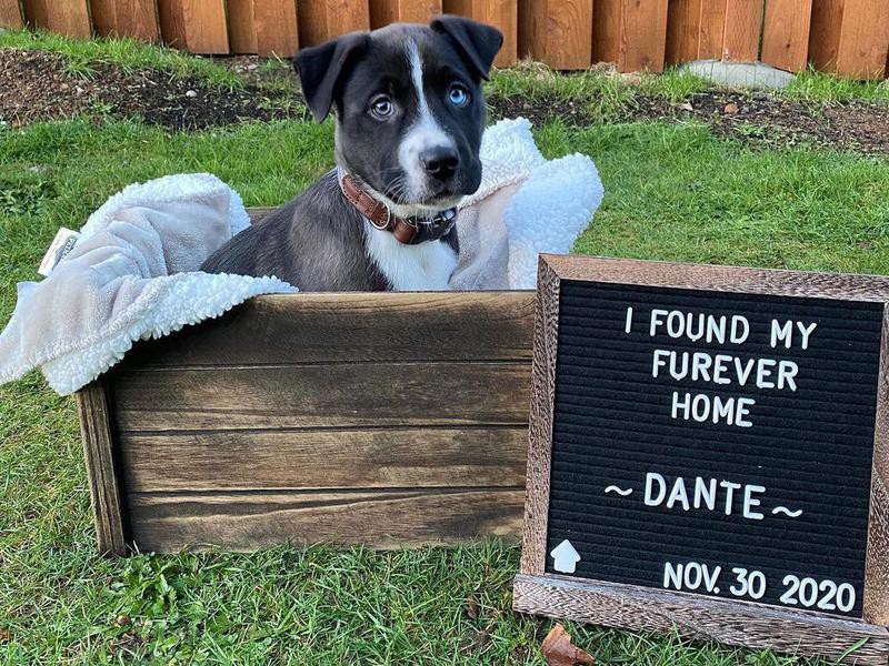 cute puppy adopted