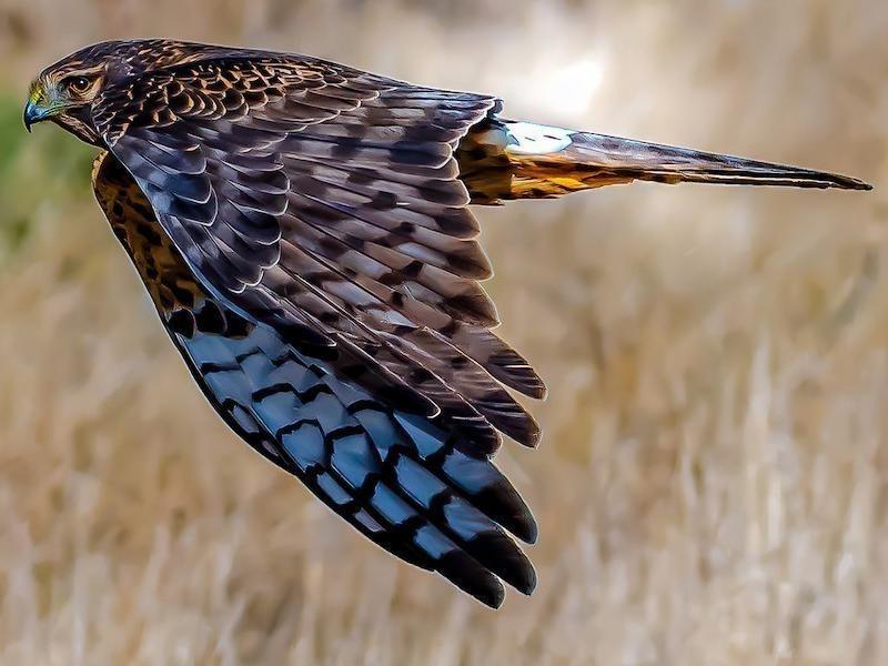 birder spots