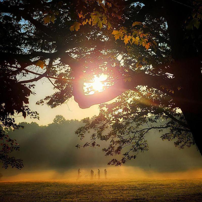 Sun peaking through trees at Prospect Park