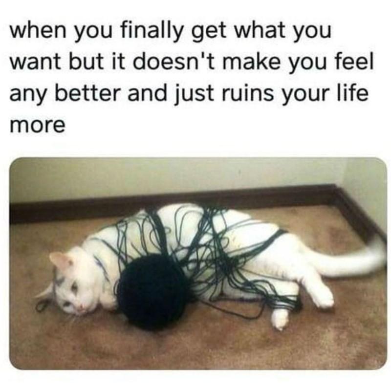 Cat tangled in a yarnball