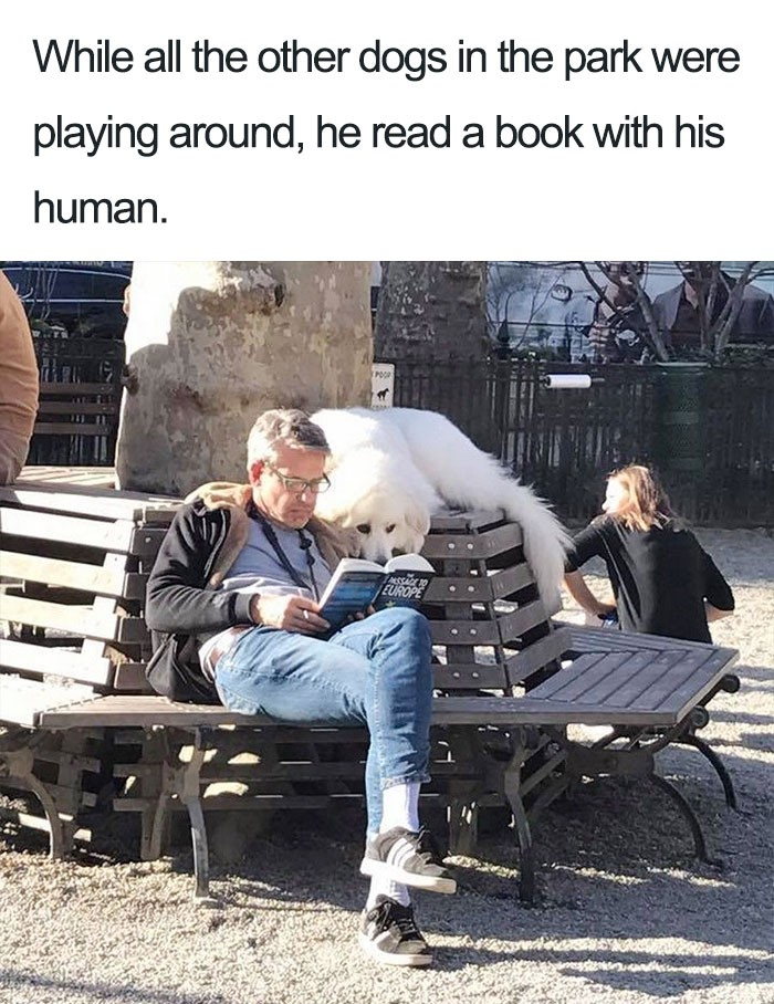 Dog reading with human