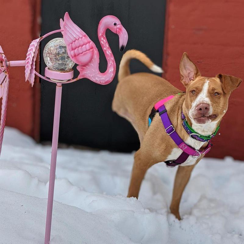 three-legged dog in snow