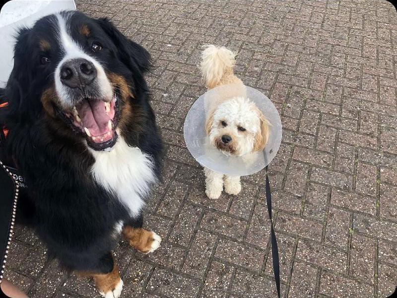 Happy dog with grumpy dog on a walk