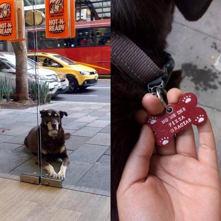 Hilarious dog tag