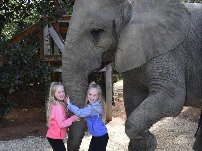 Children petting elephant at Myrtle Beach Safari