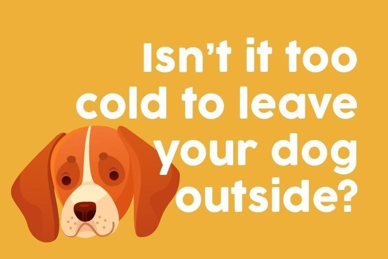 Isn't it too cold to leave your dog outside?
