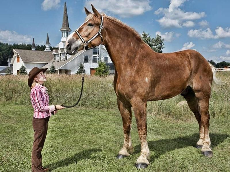 big jake tallest horse