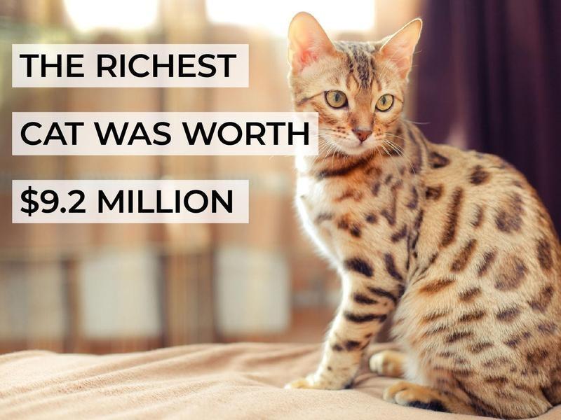 The Richest Cat Was Worth $9.2 Million