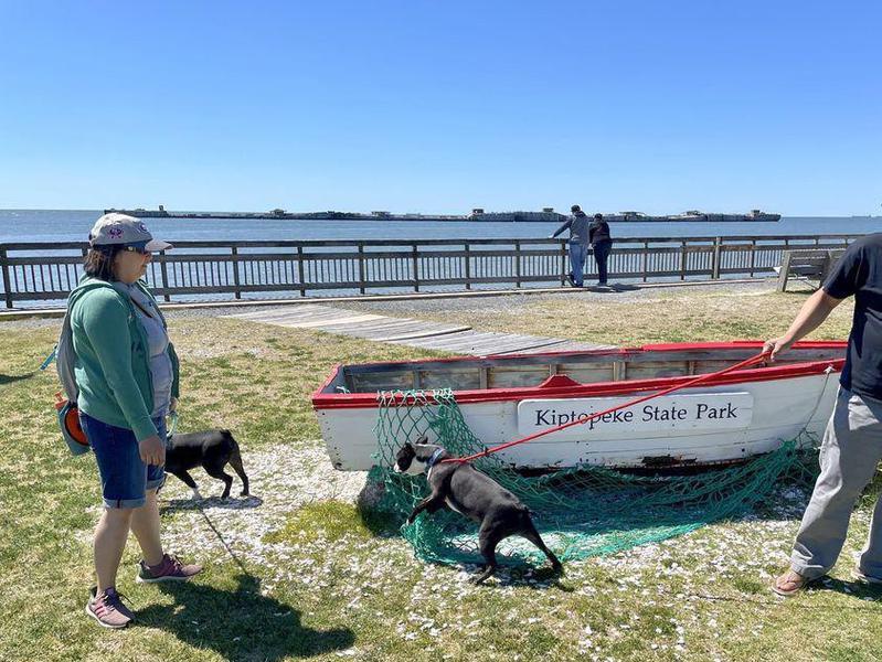 Dogs exploring at Kiptopeke State Park