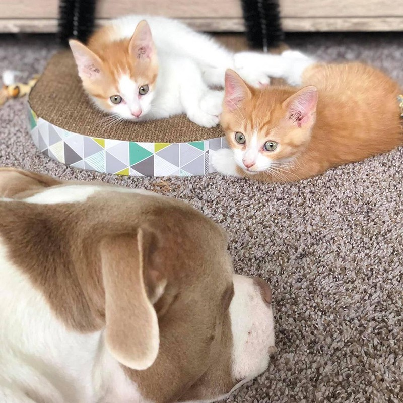 Two kittens and large dog