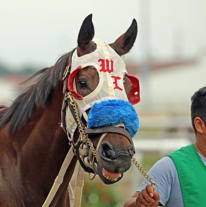 Horse Wearing Racing Gear