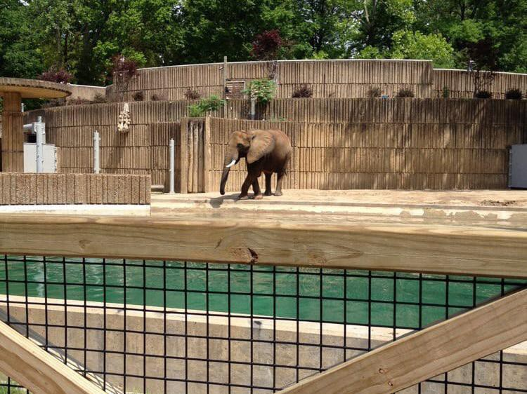 Elephant on concrete flooring
