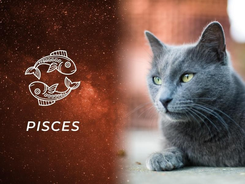 Pisces: Burmese