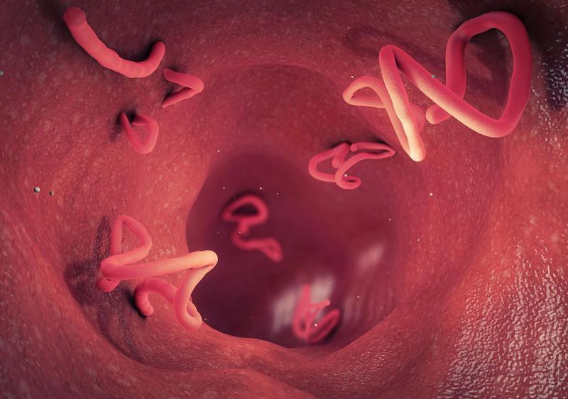 3D render of tapeworm infestation