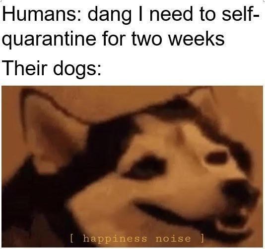 Quarantine dog