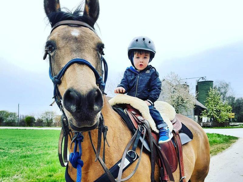 Child riding on Quarab horse