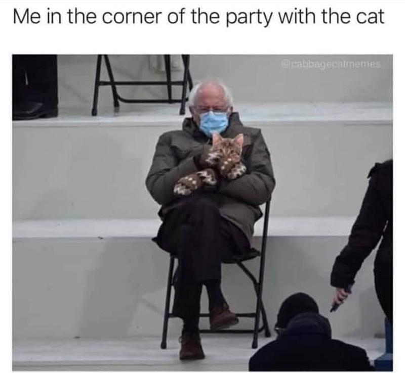 bernie sanders meme with cat