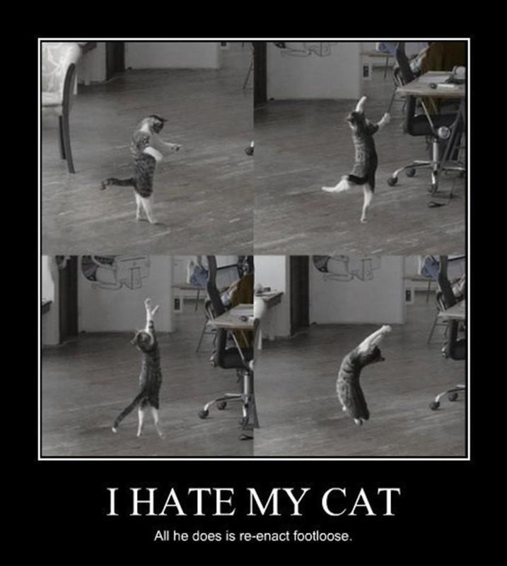 Cat re-enacting 'Footloose'