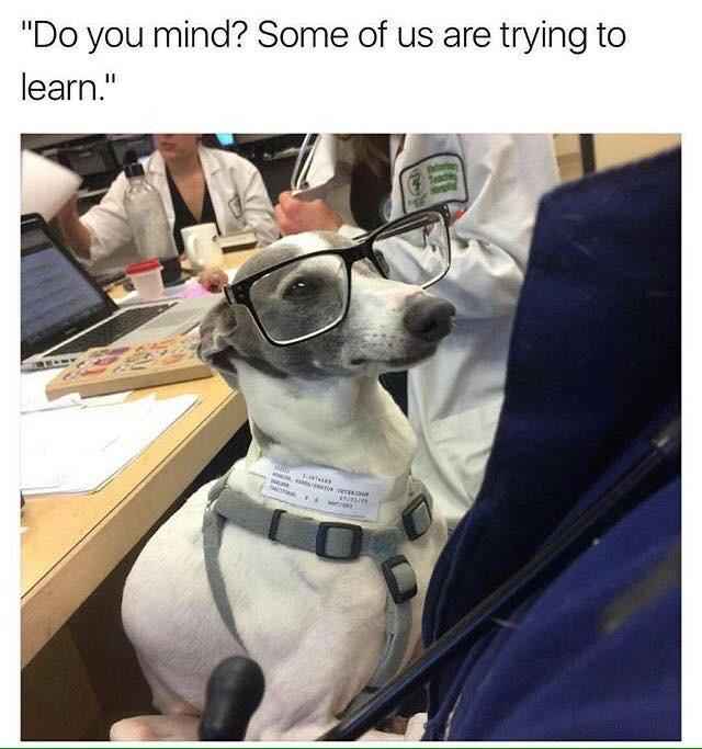 Dog wearing stylish glasses
