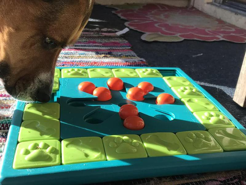 Nina Ottosson by Outward Hound Advanced Multipuzzle